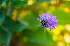 Insect On Flower Stock Photography