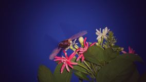 Insect and flowers. Flowers blossoms and insect finds for food Royalty Free Stock Photography