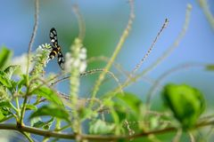 Insect with flowers Royalty Free Stock Image