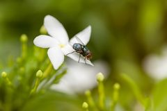 Insect fly on the flower. Close up of Insect fly on the flower Stock Image