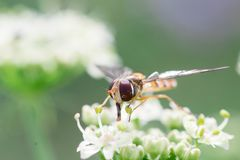 Insect on pistils. Insect, fly on a pistils of a plant Royalty Free Stock Image