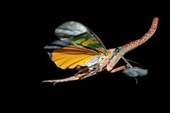 Insect flying stock photography