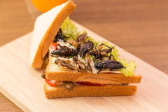 Insect food. Sandwich made of fried insect meat and mozzarella cheese, mayonnaise and tomato, lettuce with orange juice presented on a wooden board. Close-up Stock Image