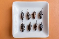 Insect foods in banana cupcakes stock image
