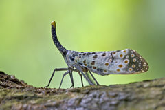 Insect  Foraging Stock Photo