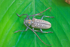 Insect From Thailand Stock Photos