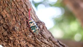 Insect; Fulgoridaeinsect op longan boom royalty-vrije stock fotografie