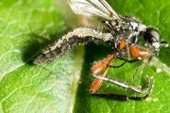 Insect gedood door de paddestoel royalty-vrije stock afbeeldingen
