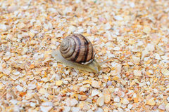Insect grape snail shells Royalty Free Stock Photos