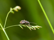 Insect on grass Stock Photography