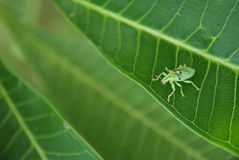 Insect Stock Photography