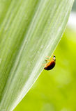 Insect in green leaf Stock Photo
