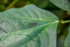 Insect on green leaf Stock Image