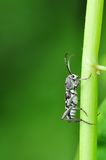 Insect in green nature or in the garden. Insect in green nature garden Royalty Free Stock Images