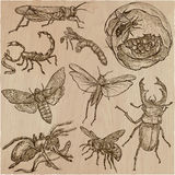 INSECT - An hand drawn vector pack, line art Royalty Free Stock Images