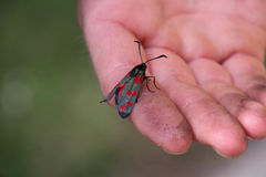 Insect on the hand Stock Photos