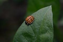 Insect in het bos Royalty-vrije Stock Afbeeldingen