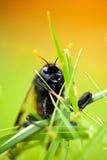 Insect in het gras Stock Foto
