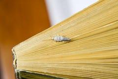 Insect het voeden op papier - zilvervisje Zilvervisje aan het eind van het boek royalty-vrije stock afbeeldingen
