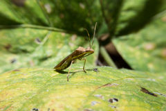 Insect holding on green leaf with close up detailed view. Stock Photo
