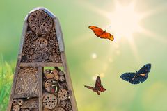 Insect hotel with flying butterflies. And shining sun Royalty Free Stock Images