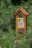 Insect house and black pine Stock Photos