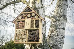Insect House on tree Stock Images