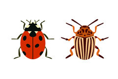 Insect icon flat isolated nature flying bugs beetle ant and wildlife spider grasshopper or mosquito cockroach animal Stock Photography