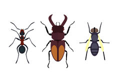 Insect icon flat isolated nature flying bugs beetle ant and wildlife spider grasshopper or mosquito cockroach animal Royalty Free Stock Image