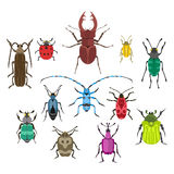 Insect icon flat isolated vector illustration. Royalty Free Stock Image