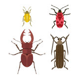 Insect icon flat isolated vector illustration. Royalty Free Stock Photos