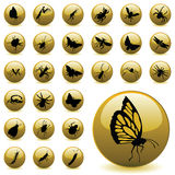Insect icons Stock Image