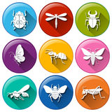 Insect icons Royalty Free Stock Image