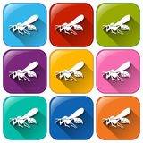 Insect icons Royalty Free Stock Photos