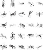 Insect icons set vector illustration