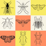 Insect icons set. Cicada and stag beetle, firefly and wasp, fly and paperkite butterfly, colorado beetle and mosquito,. Vector illustration Royalty Free Stock Photos