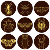 Insect icons set. Cicada and stag beetle, firefly and wasp, fly and paperkite butterfly, colorado beetle and mosquito, vector illustration Stock Image