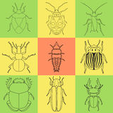 Insect icons set. dor-beetle and firefly, firebug and ant, fly and cockroach, colorado beetle and mosquito Stock Photos