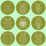 Insect icons set. Dor-beetle and firefly, firebug and ant, fly and cockroach, colorado beetle and mosquito, stink bug and trilobite. vector illustration Stock Image