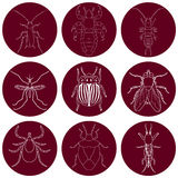 Insect icons set. Earwig and tick, stink bug and cricket, fly and louse, colorado beetle and mosquito, Stock Photos