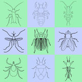Insect icons set. Earwig and tick, stink bug and cricket, fly and louse, colorado beetle and mosquito, Royalty Free Stock Photography