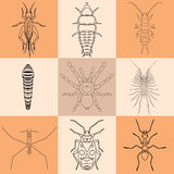 Insect icons set.  Stock Images