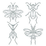 Insect icons, vector set. Abstract triangular style. mantis, grasshopper, ant, weevil beetle Stock Image