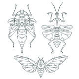 Insect icons, vector set. Abstract triangular style. Mantis Royalty Free Stock Photography