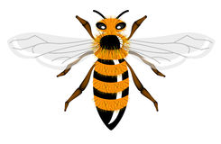 Insect illustration - bee Stock Images