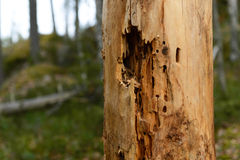 Insect-infested tree trunk stock photos