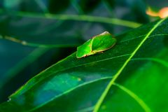 Insect. Color and shape vary according to the nature Royalty Free Stock Photos