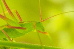Insect. On a plant leaf in a garden in Jijel, Algeria stock images