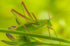 Insect. On a plant leaf in a garden in Jijel, Algeria royalty free stock photography