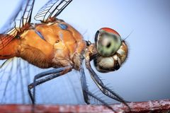 Insect, Invertebrate, Close Up, Macro Photography royalty free stock photo